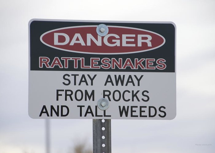 Snake Greeting Card featuring the photograph Texas Danger Rattle Snakes Signage by Thomas Woolworth