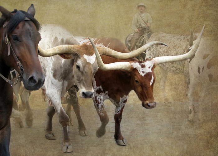 Cattle Station Greeting Cards
