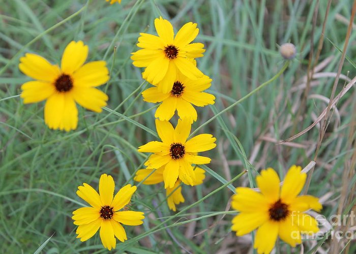 Texas Wild Flower Greeting Card featuring the photograph Texas Wild Flower by Angie Andress