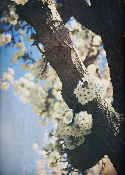 Blossoms Greeting Card featuring the photograph That March by Laurie Search