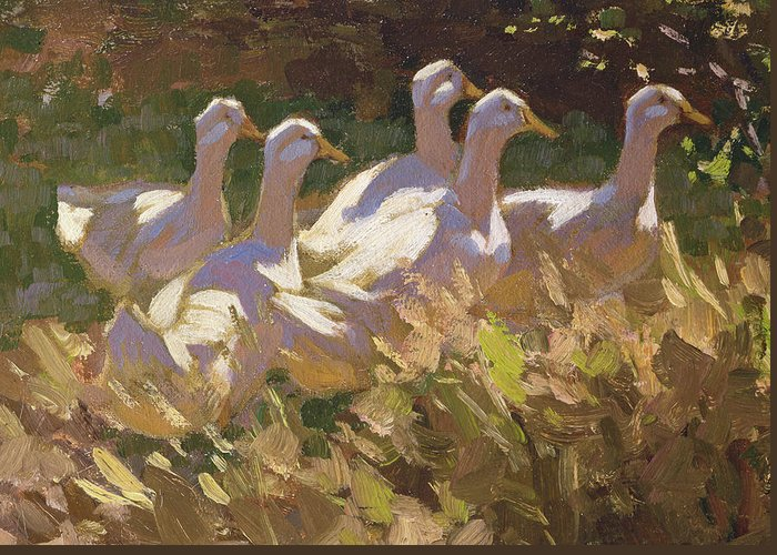 Geese Running Greeting Cards