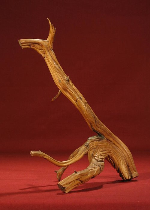 Cedar Greeting Card featuring the sculpture The Beast by Pimba