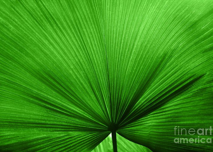 Leaves Greeting Card featuring the photograph The Big Green Leaf by Natalie Kinnear