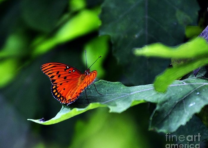 Butterflies Greeting Card featuring the photograph The Bigger Picture by Dane Stensen