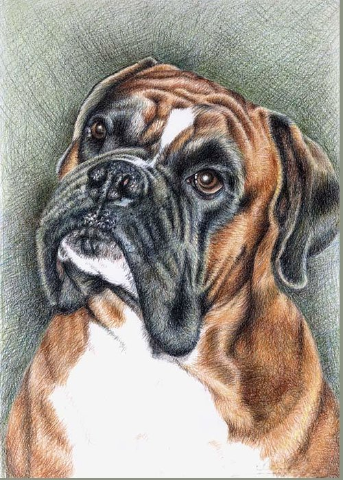 Dog Greeting Card featuring the drawing The Boxer by Nicole Zeug
