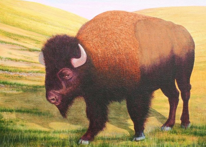 Buffalo Greeting Card featuring the painting The Buffalo by J W Kelly