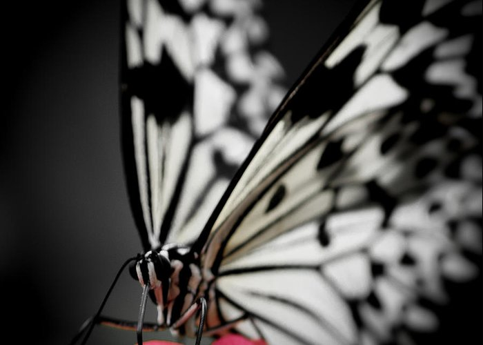 Jen Baptist Greeting Card featuring the photograph The Butterfly Emerges by Jen Baptist