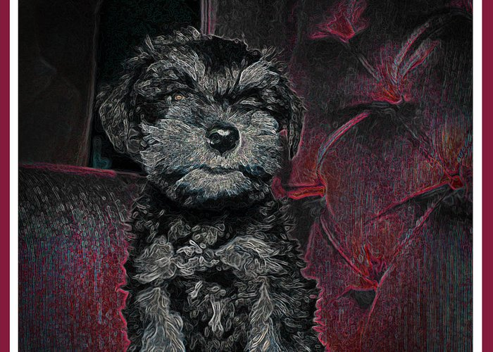 Schnauzer Greeting Card featuring the photograph The Canine's Throne by Brian Graybill