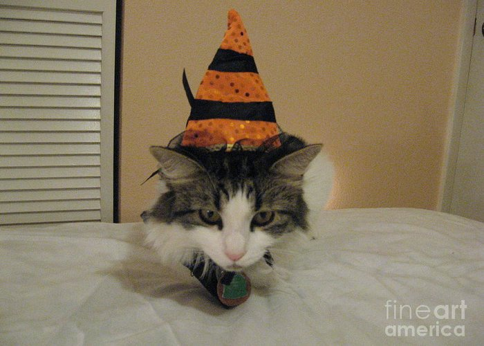 Witch Halloween Cat Wicca Photographs Greeting Cards