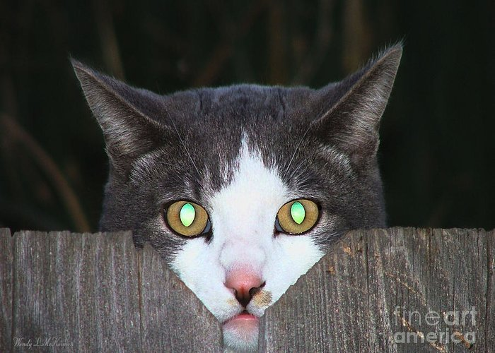 Cat Canvas Prints Greeting Card featuring the photograph The Cat's Meow by Wendy McKennon