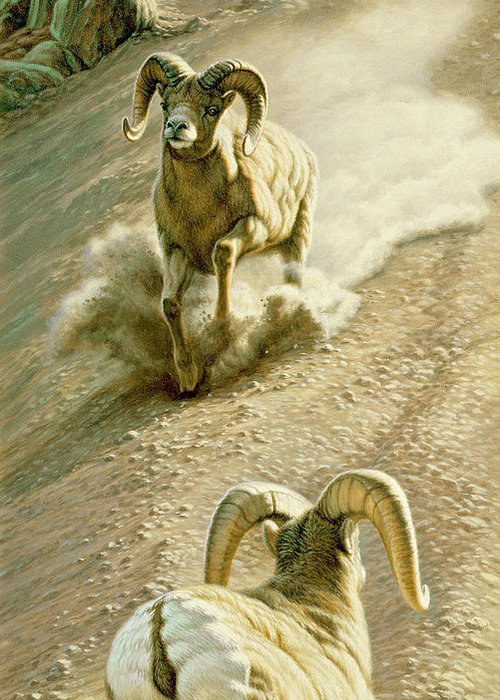 Bighorn Sheep Greeting Cards