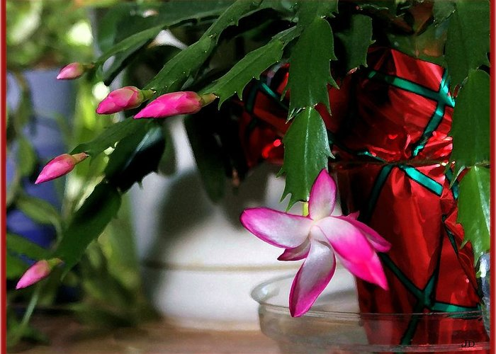 Cactus Greeting Card featuring the photograph The Christmas Cactus by Jim Darnall