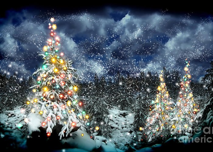 The Christmas Tree Greeting Card featuring the photograph The Christmas Tree by Boon Mee