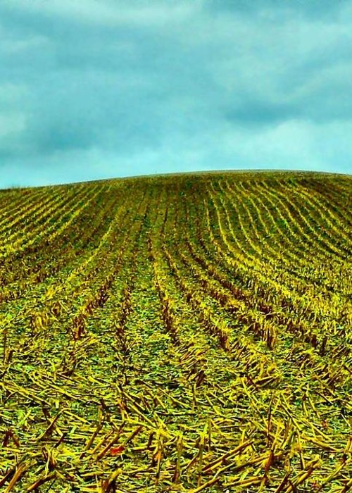 Indiana Corn Rows Greeting Card featuring the photograph The Corn Rows by Julie Dant