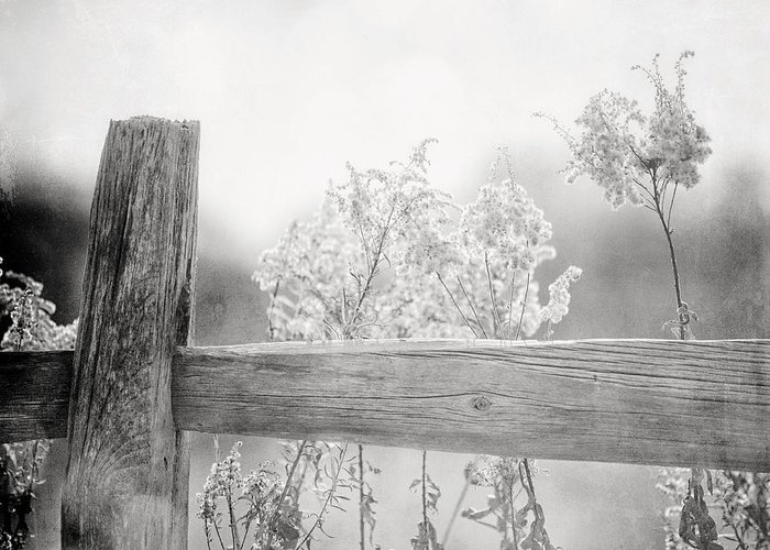 Black And White Greeting Card featuring the photograph The Country Fence In Black And White by Lisa Russo
