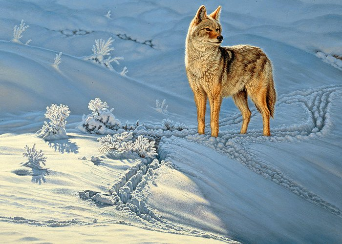 Wildlife Greeting Card featuring the painting the Coyote - God's Dog by Paul Krapf