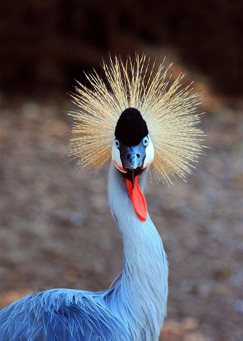 West African Crowned Crane Greeting Card featuring the photograph The Crowned Crane by Trina Ansel