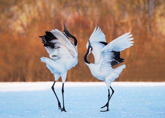 Bird Dancing Greeting Cards
