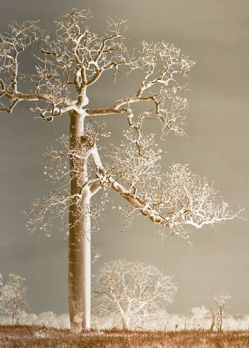 Landscapes Greeting Card featuring the photograph The Dreaming Tree by Holly Kempe