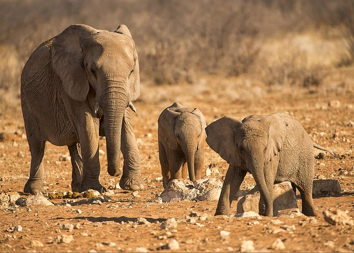 Sand Greeting Card featuring the photograph The Elephants Itching Rock by Paul W Sharpe Aka Wizard of Wonders