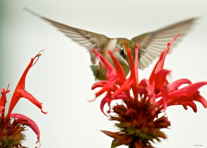 Birds Greeting Card featuring the photograph The Eye Of The Hummingbird by Kristin Hatt