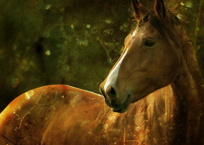 Horse Greeting Card featuring the photograph The Fairytale Horse by Angel Ciesniarska