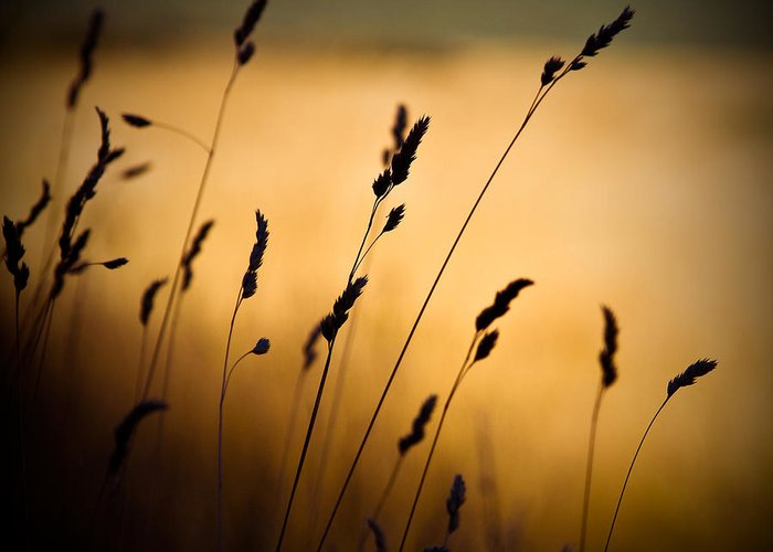 Filed At Sunset Greeting Card featuring the photograph The Field by Dave Bowman