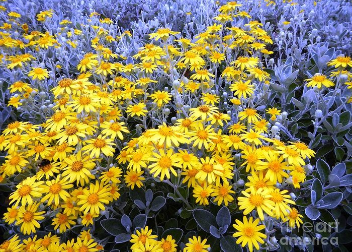 Flowers Greeting Card featuring the photograph The Field Of Wonder by Loreta Mickiene