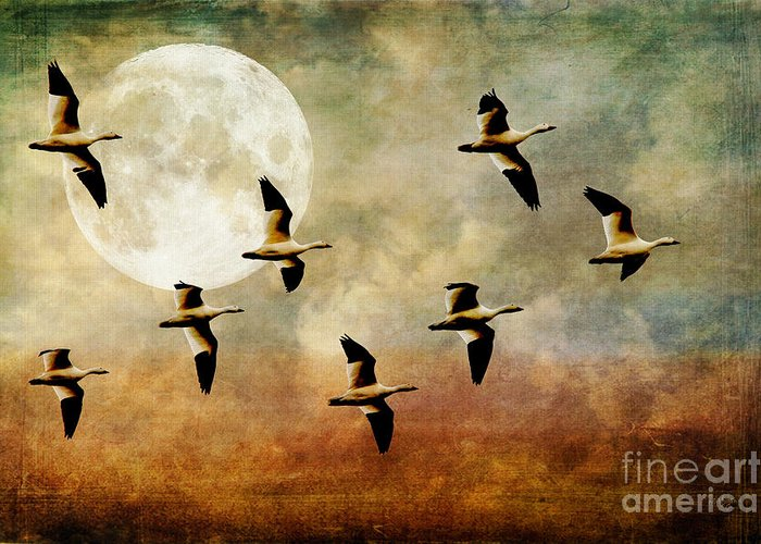Wild Geese And Moon Greeting Cards