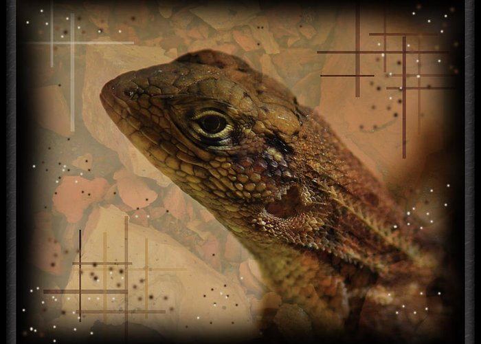 Collage Greeting Card featuring the photograph The Florida Lizard by Andrew Sliwinski