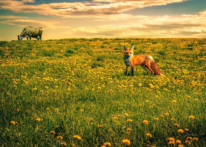 Cows Greeting Card featuring the photograph The Fox And The Cow by Bob Orsillo