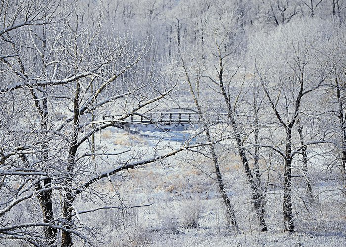 Frozen Bridge Greeting Card featuring the photograph The Frozen Bridge by Maria Angelica Maira