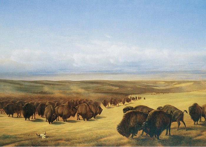 William Jacob Hays Greeting Card featuring the painting The Gathering Of The Herd by William Jacob Hays