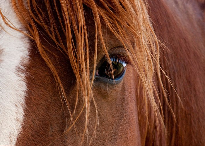 Horse Greeting Card featuring the photograph The Gentle Eye by Eric Rundle
