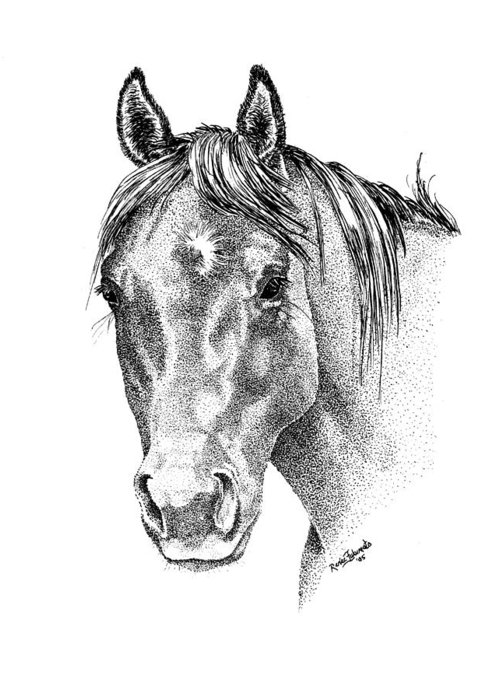 Horse Greeting Card featuring the drawing The Gentle Eye Horse Head Study by Renee Forth-Fukumoto