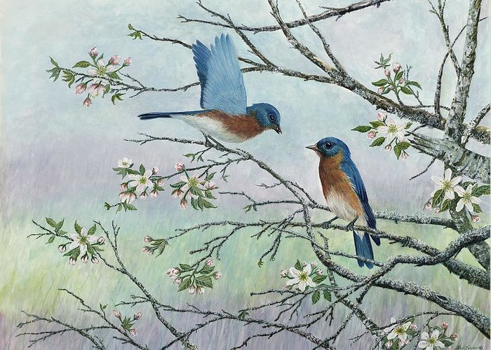 Bluebirds; Trees; Wildlife Greeting Card featuring the painting The Gift by Ben Kiger