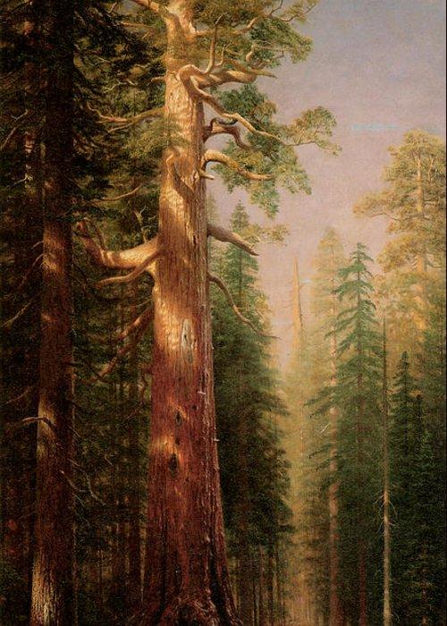 Albert Bierstadt Greeting Card featuring the painting The Great Trees Mariposa Grove California by Albert Bierstadt