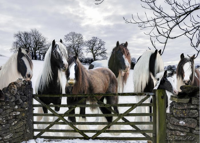 Horse Greeting Card featuring the digital art The Gypsies by Terry Kirkland Cook