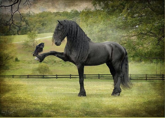 Friesian Horses Greeting Card featuring the photograph The Harbinger by Fran J Scott