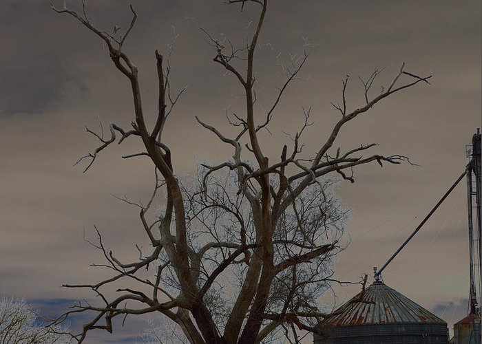 Spooky Greeting Card featuring the photograph The Haunting Tree by Alys Caviness-Gober