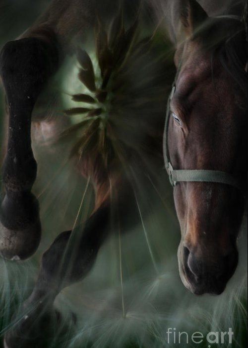 Abstract Greeting Card featuring the photograph The Horse And The Dandelion by Angel Tarantella
