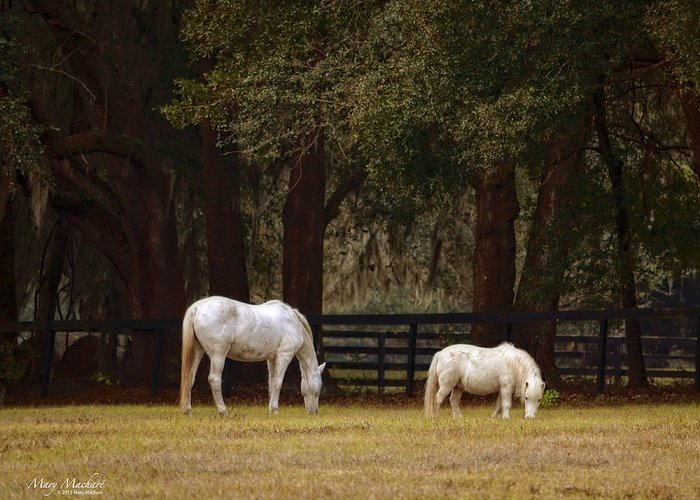 The Horse And The Pony Greeting Card featuring the photograph The Horse And The Pony - Standard Size by Mary Machare