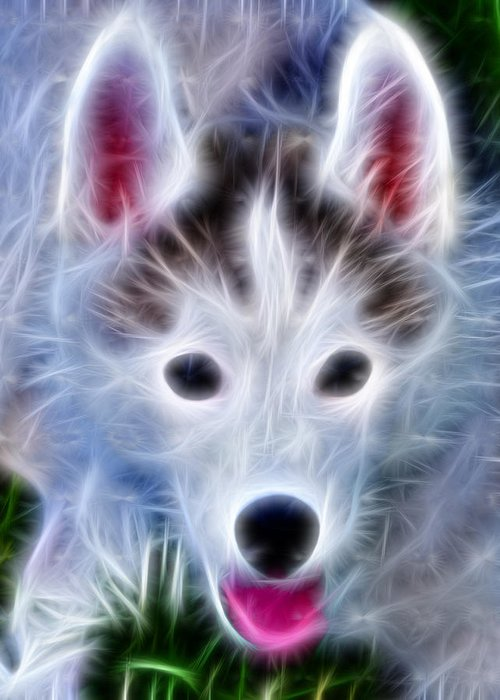 Huskie Pup Greeting Card featuring the photograph The Huskie Pup by Bill Cannon
