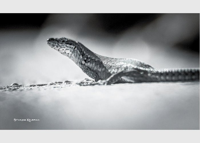 Reptile Greeting Card featuring the photograph The Iron Lizard IIi by Stwayne Keubrick