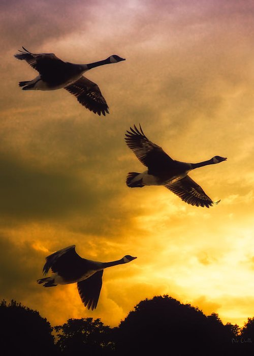 Geese Greeting Card featuring the photograph The Journey South by Bob Orsillo