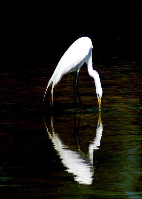 Egret Greeting Card featuring the photograph The Kiss by Walter Heussmann
