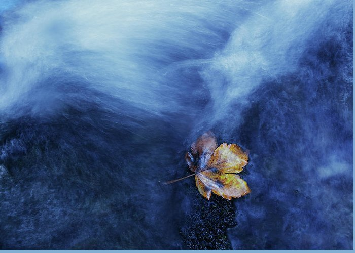 Leaf Greeting Card featuring the photograph The Landing by Michel Manzoni