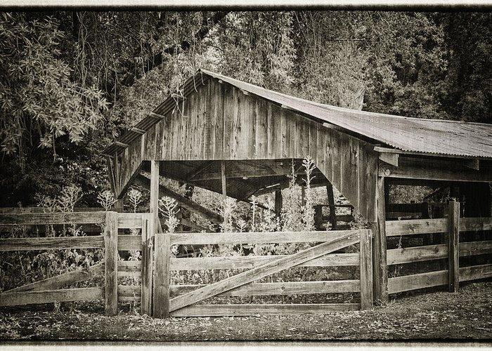 Antique Greeting Card featuring the photograph The Last Barn by Joan Carroll