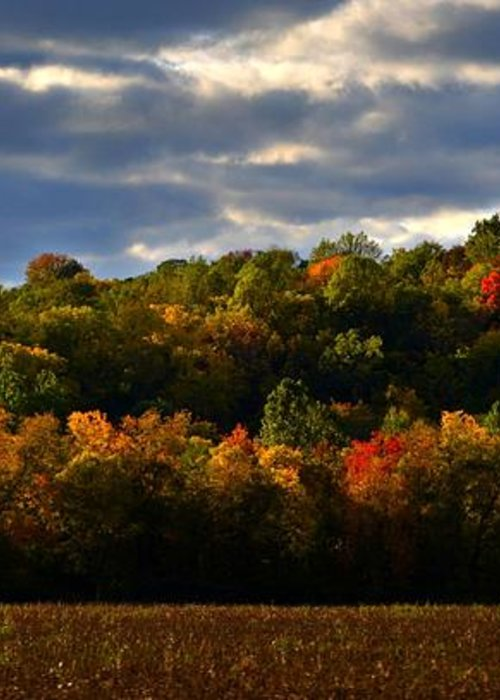 Autumn Greeting Card featuring the photograph The Layers Of Autumn by Julie Dant