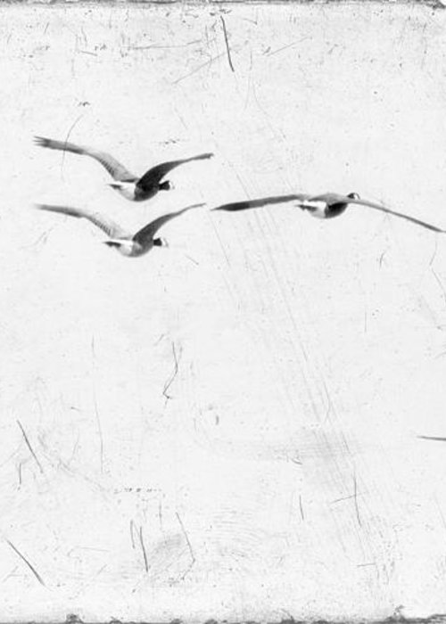 Geese Greeting Card featuring the photograph The Leader by Rebecca Cozart